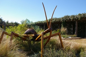 Big Bug assassin bug