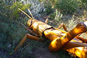 Big Bug grasshopper