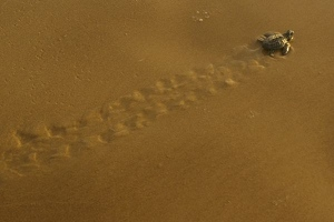 Tracks in wet sand