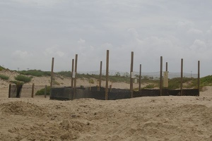 Turtle nest corral