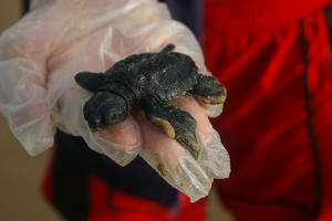 Hatchling closeup
