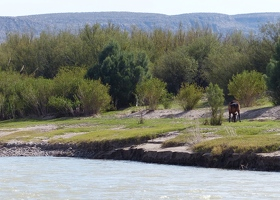 Rio Grande with Mexican horse