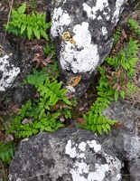 Green ferns and white lichen