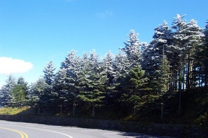 Frosty trees on Mount Mitchell