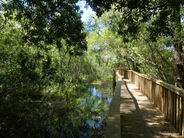 Boardwalk in Sea Pines Forest Preserve