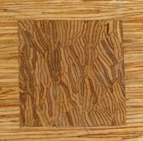 Detail of wood grain