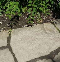 Stone path in Chinese garden. See the tiny dot in the lower right?