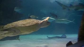 Video: Turtles and rays