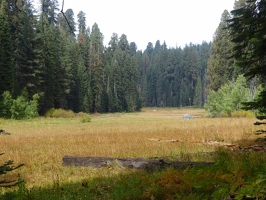 Crescent Meadow and Tharps Log