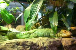 Happy green lizard