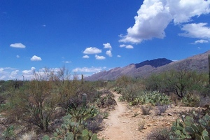 Sabino Canyon path