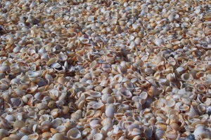 Piles of shells
