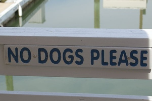 ... no dogs allowed