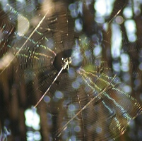 Rainbow in spider web
