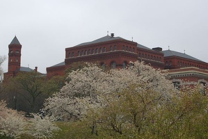 Smithsonian Castle and cherry trees