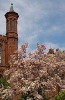 Magnolias and Smithsonian Castle