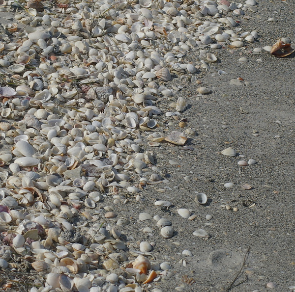 Shelling on the beach